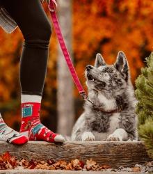 Kolorowe skarpetki - Jak pies z kotem